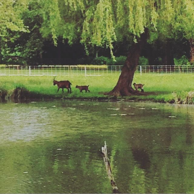 L'étang et ses abords occupés par les moutons, les chèvres ou encore les ruches!