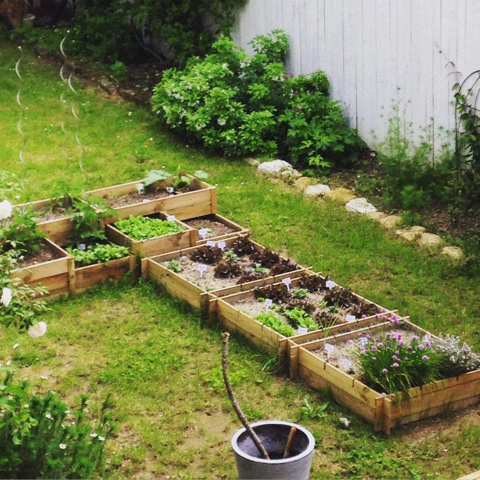 Les Carr S Potagers Du Petit Jardin Mes Petits Jardins Bonheurs