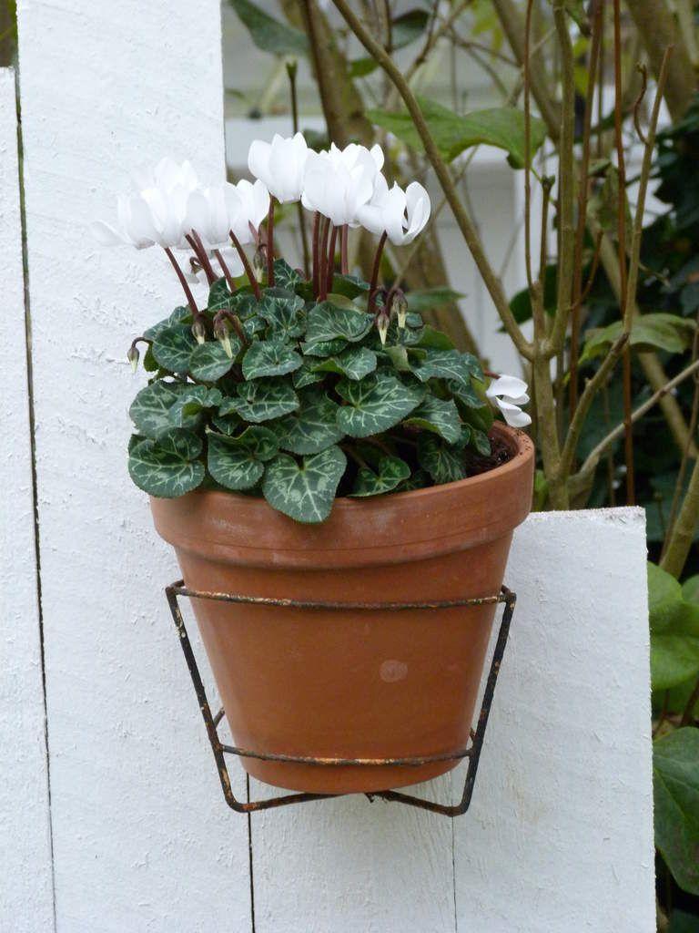Un vieux pot...ou un pot en terre cuite, qui ne fait jamais moderne! Et on y met des plantes aux formes anciennes, bien sûr!