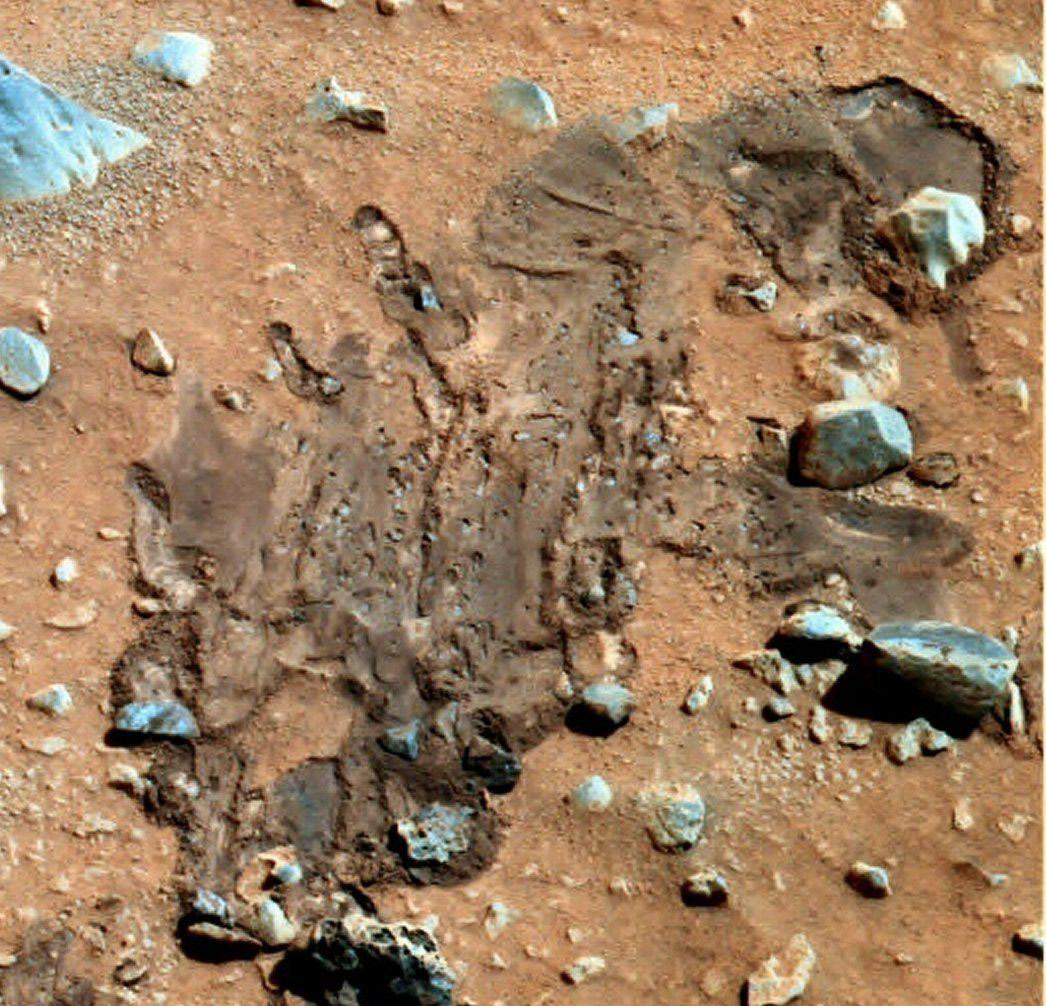 De discrètes formes de vies à la surface de Mars,