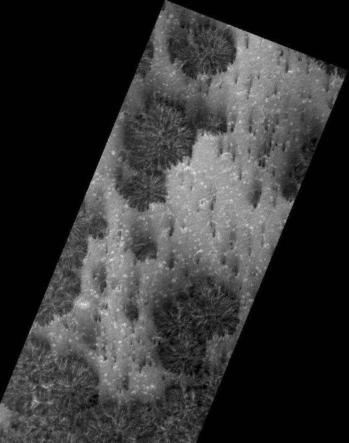 Structures qui dépassent du sol avec ombres portées, peut-être des plantes