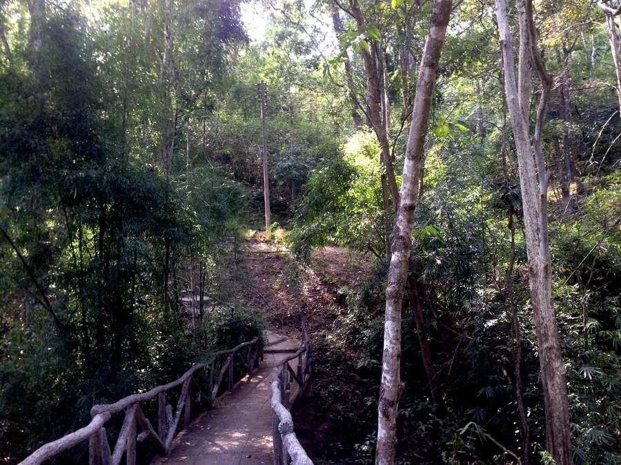 """un endroit du Zoo et la marche vers l'entrée du zoo - un panneau à l'entrée d'un stand de boisson (pas de wifi mais sourire) est-il écrit - photos de verdure qui font un peu """"jungle"""" - l'éléphant (de la nourriture est proposée pour les nourrir, moyennant quelques sous) et la récompense d'une noix de coco fraîche au retour"""