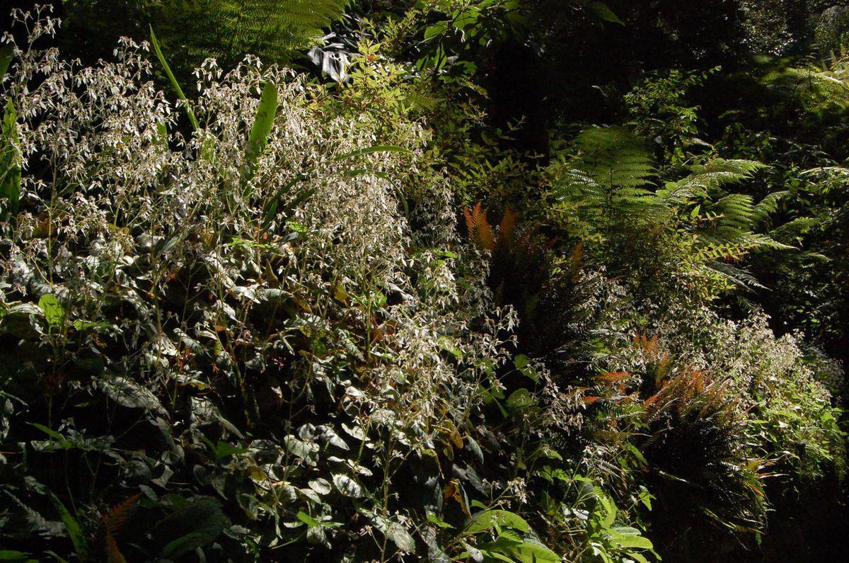 Sintra - Parc et Jardins de Montserrate