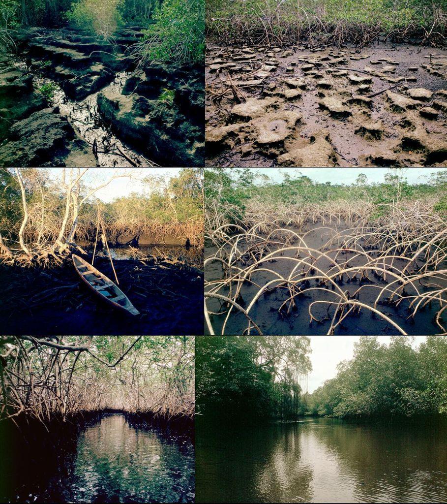 La mangrove en images : 1. La Mondah (Gabon)