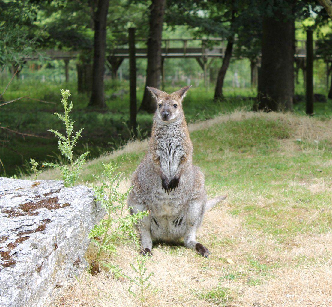 Vacances dans l'Allier:2éme chapitre : Le Pal