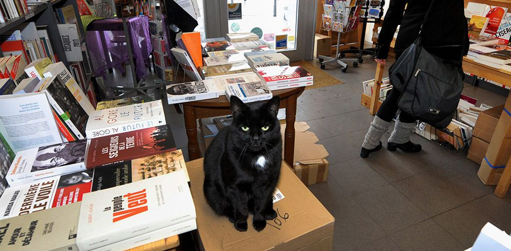 Collection Chat noir