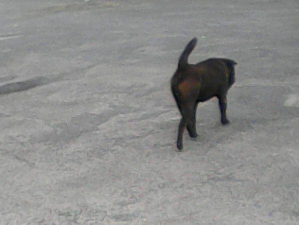 La limace et le chien