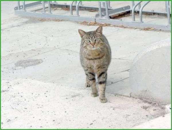 L'association n'est malheureusement pas en mesure de venir en aide à des chats extérieurs à l'heure actuelle.