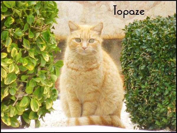 Topaze, marrainée par Lalyana. Non revue depuis Décembre 2016.