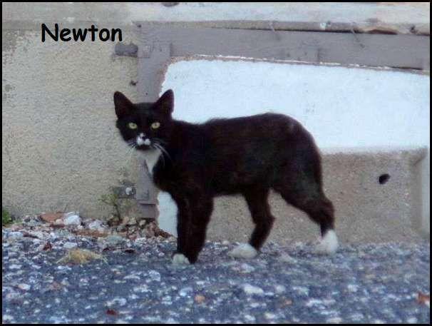 Newton, un nouveau du côté de chez Miriel et Feeling