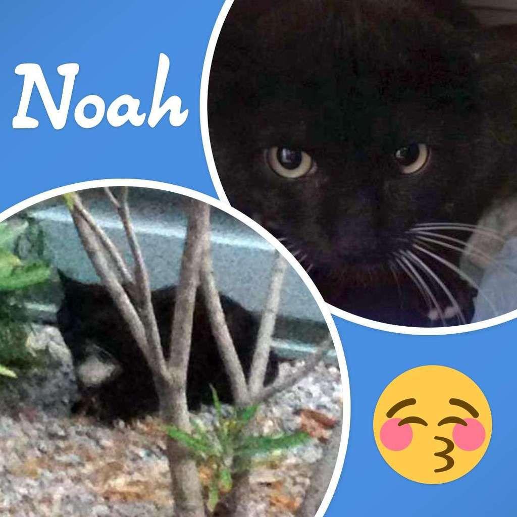 Ce qu'il advint de Noah