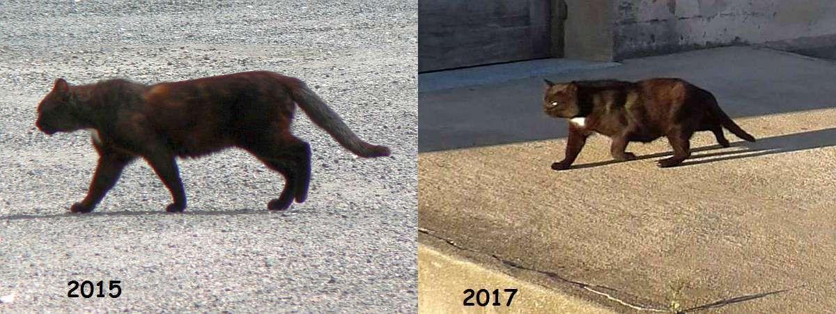Première photo de Lewis en 2015 et cet été ... La gamelle semble bonne.