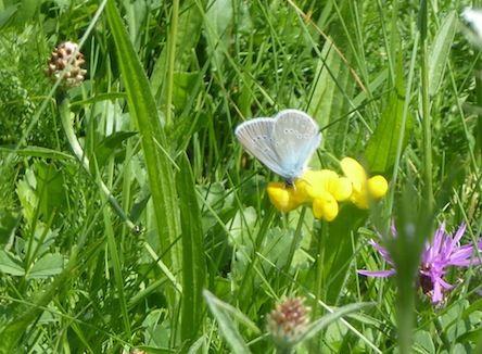 Papillons de juillet