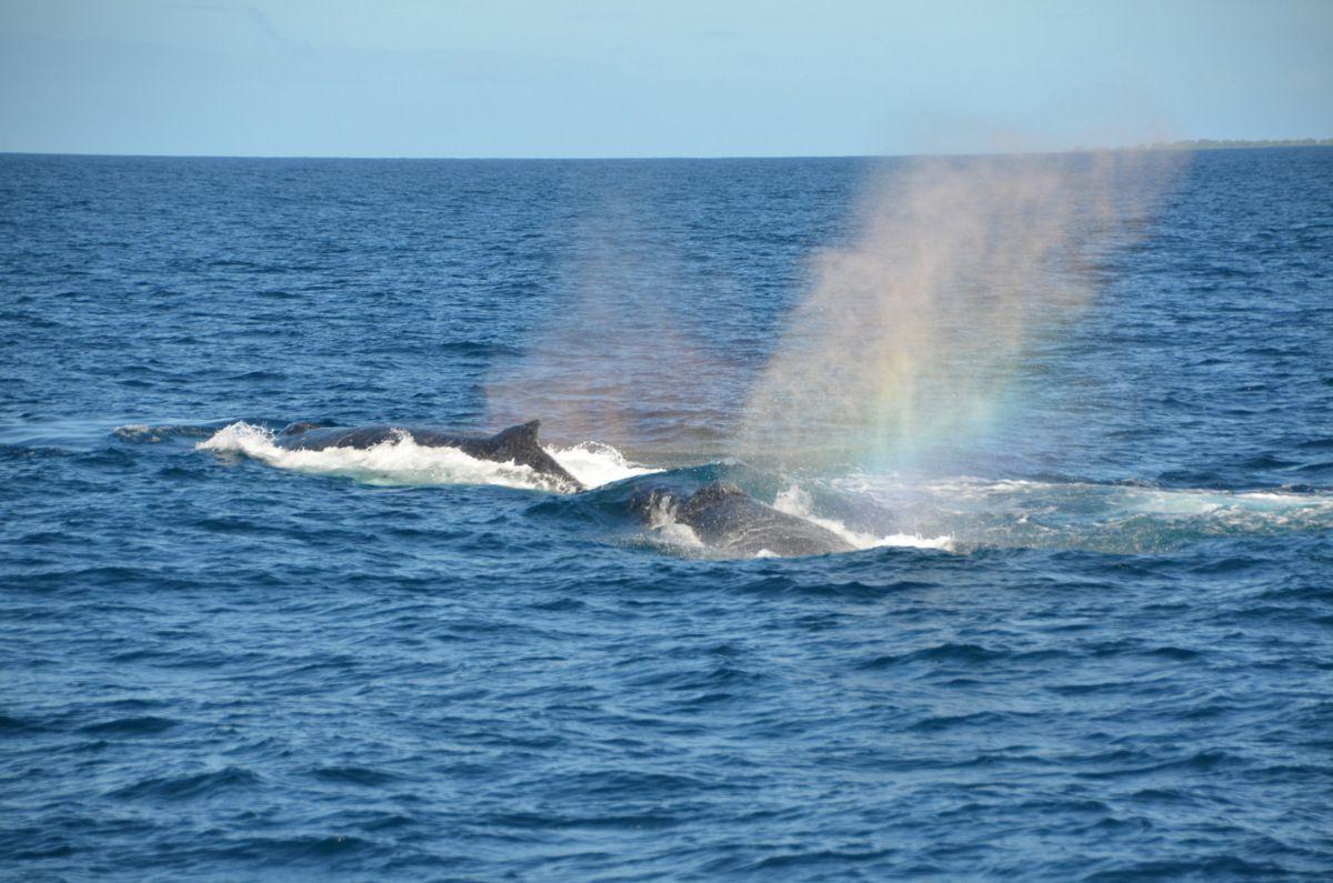 Les baleines comme si vous y étiez - acte 1