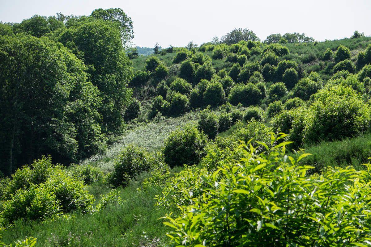 La nature à l'état brut - Limousin