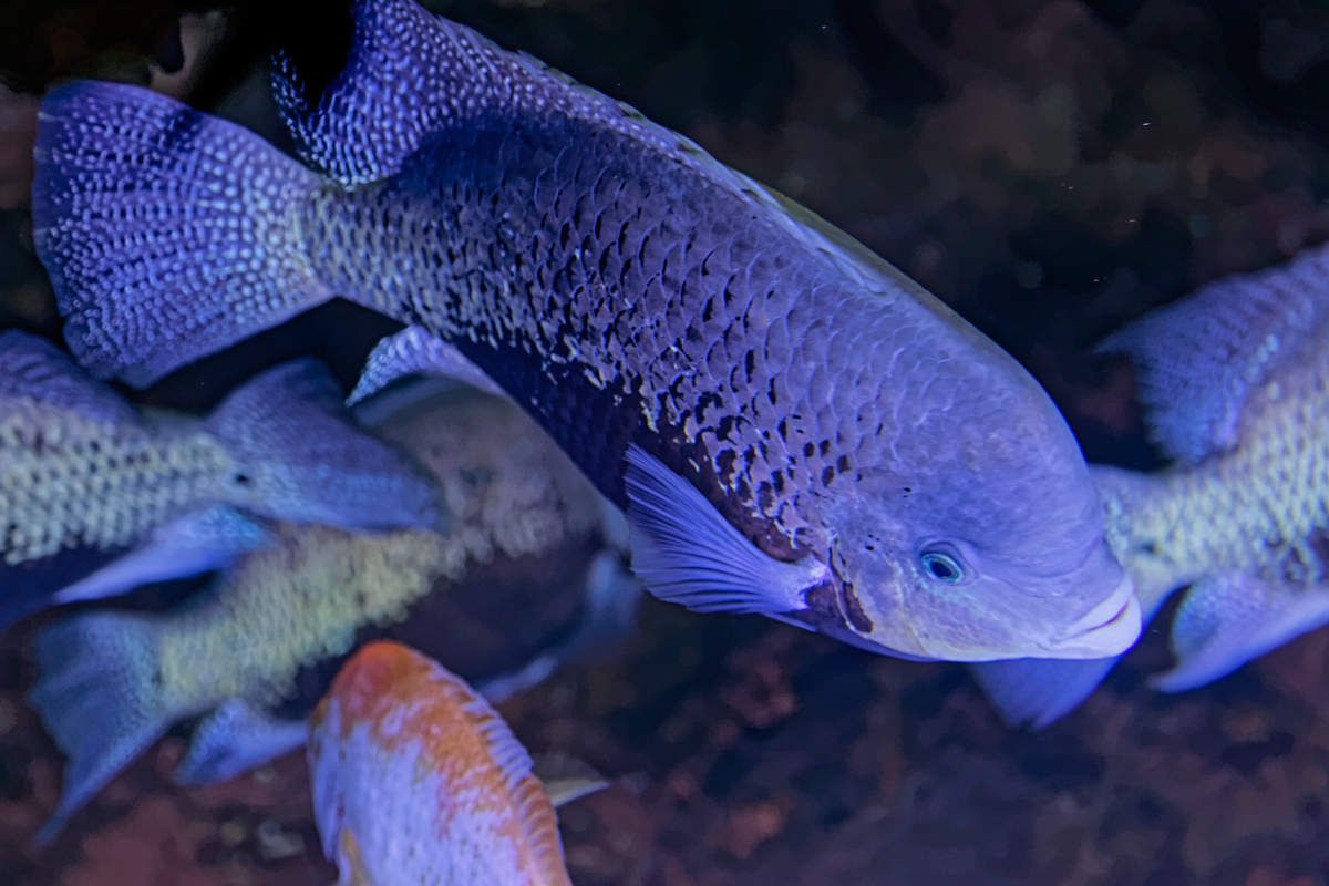 L'aquarium de Limoges