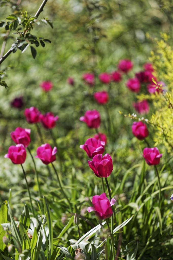 Le Jardin de Liliane - Avril 2016