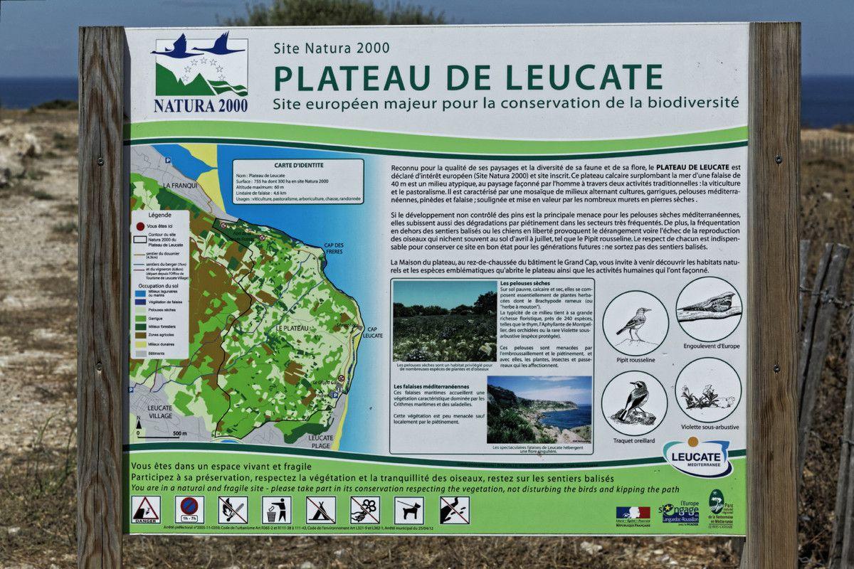 Le Plateau de Leucate