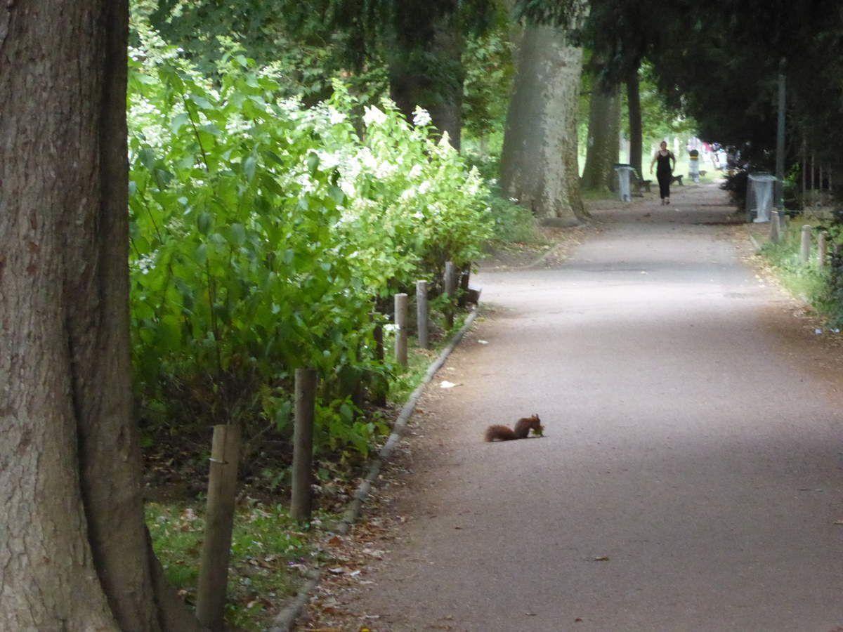 Au parc de la Tête d'Or à Lyon