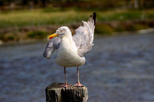 Pjtg invitent b g / La compagnie des oiseaux