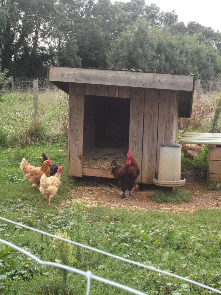 Photo visite la ferme de la mantellerie 13 09 2015 for Ce que mange les poules