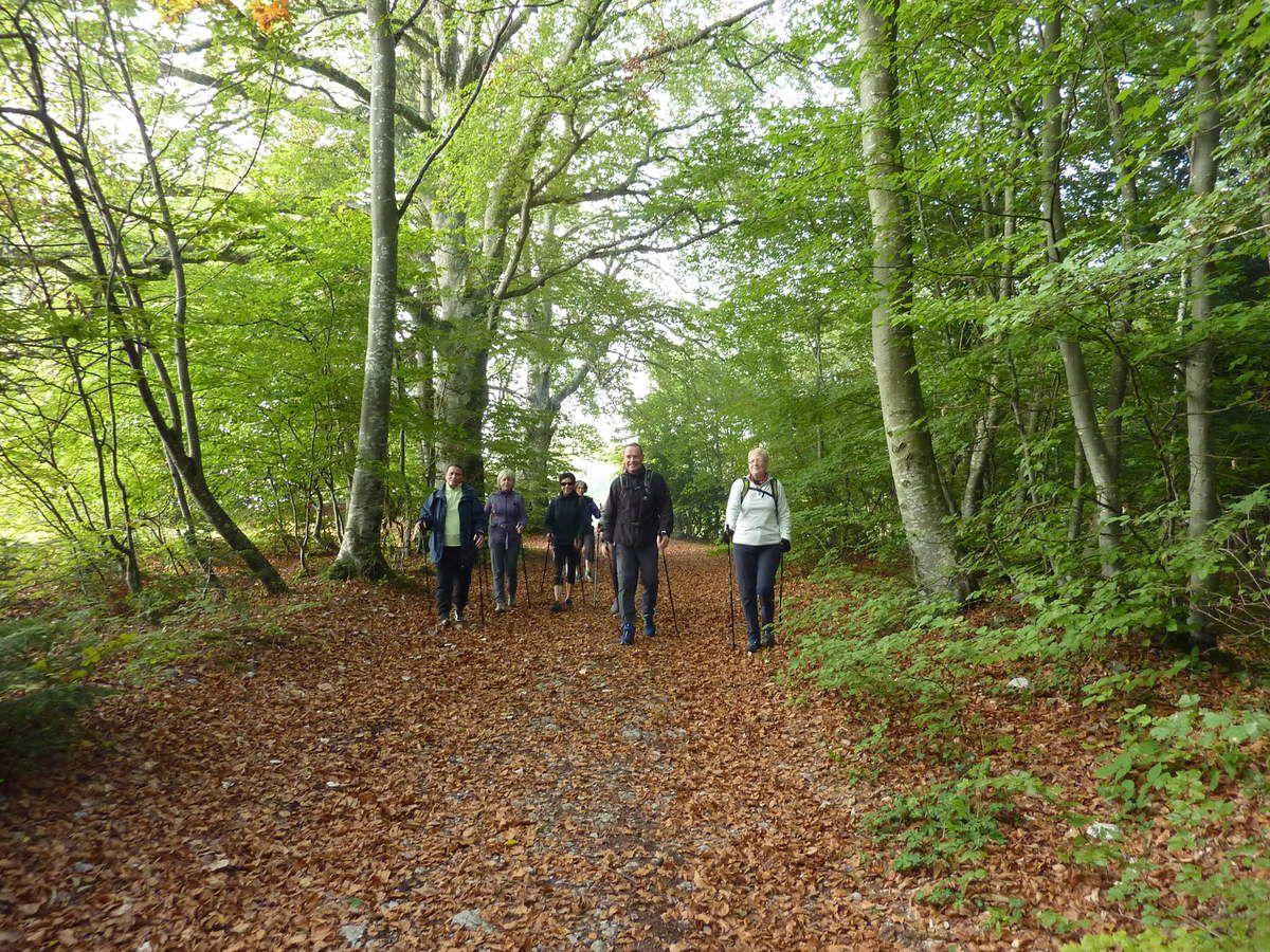 Marche dans les bois.