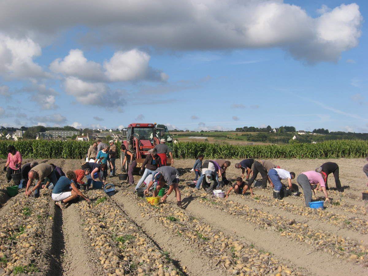 Tenez vous pr ts le 3 septembre ramassage solidaire de pommes de terre au programme le - Ramassage pomme de terre ...