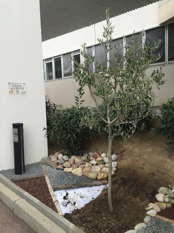 Plantation de l'arbre de la laïcité.