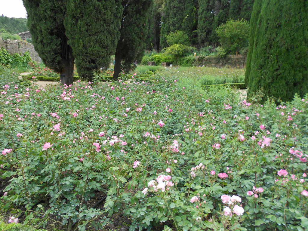 La roseraie de Fontfroide