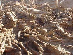 Charnier, squelettes vrac, alentours de Vilnus
