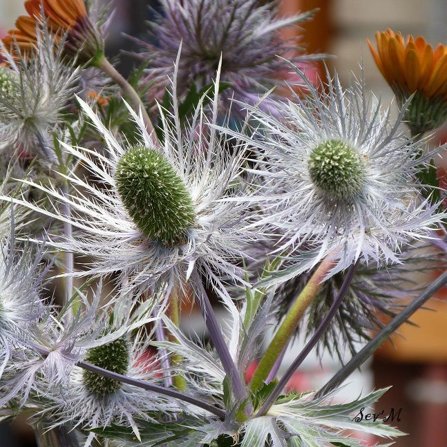 Flore au demeurant superbe.