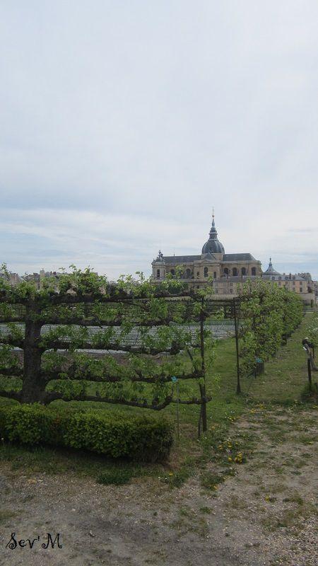 vue panoramique avec les poiriers centenaires en premier plan.