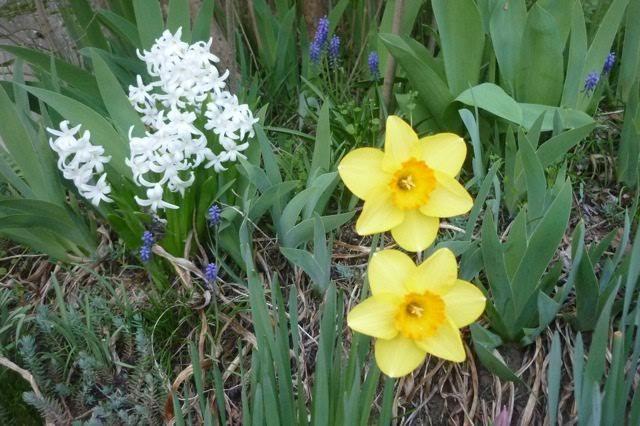 C'est aussi le printemps dans les jardins de l'école.