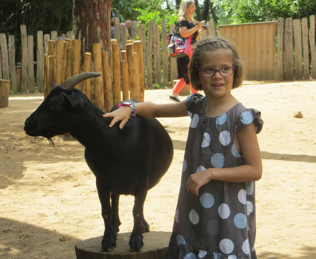 la mini-ferme, avec les chèvres qui se laissent caresser