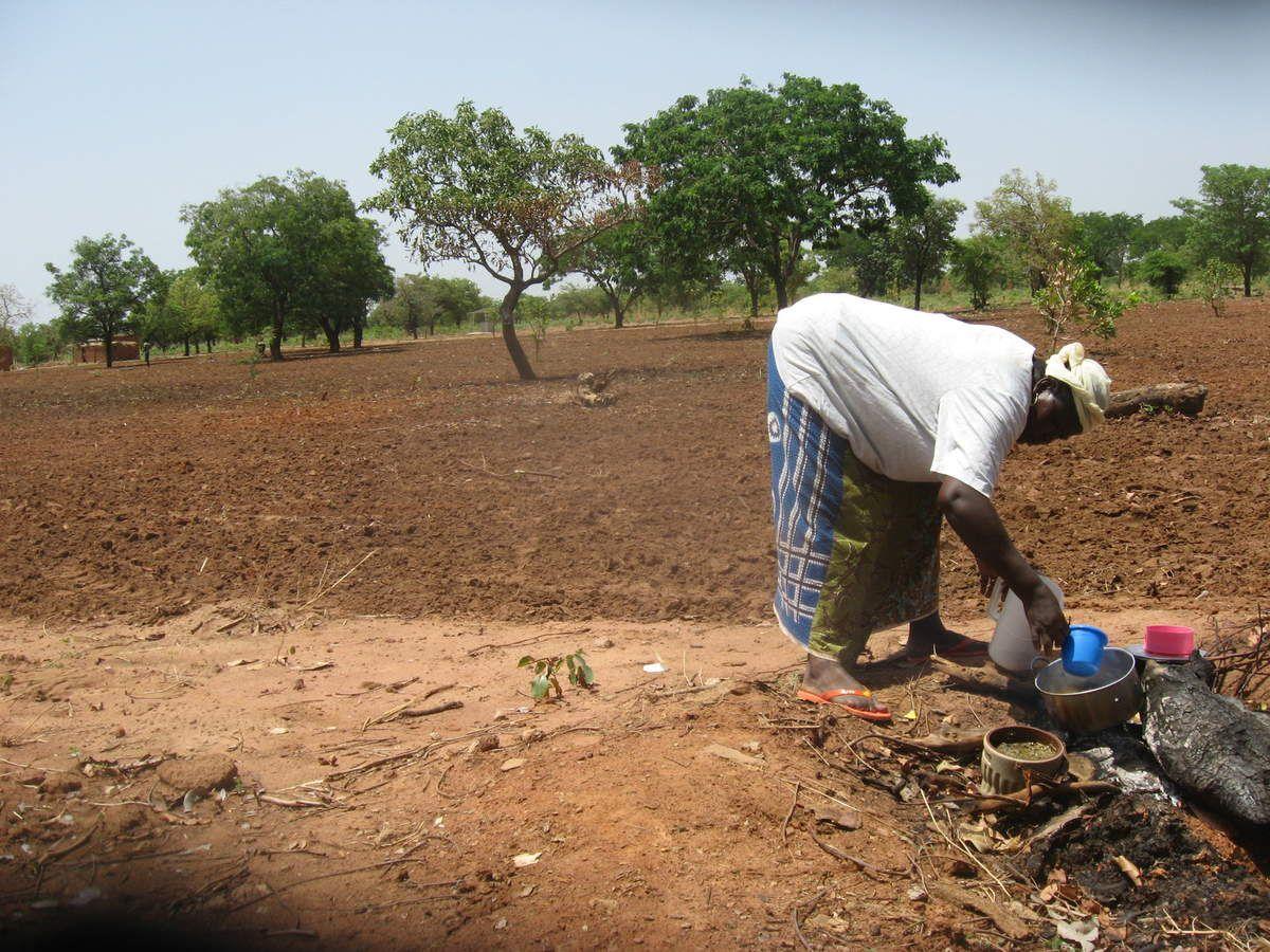 Début de la campagne agricole 2015 au projet Wurodinisso