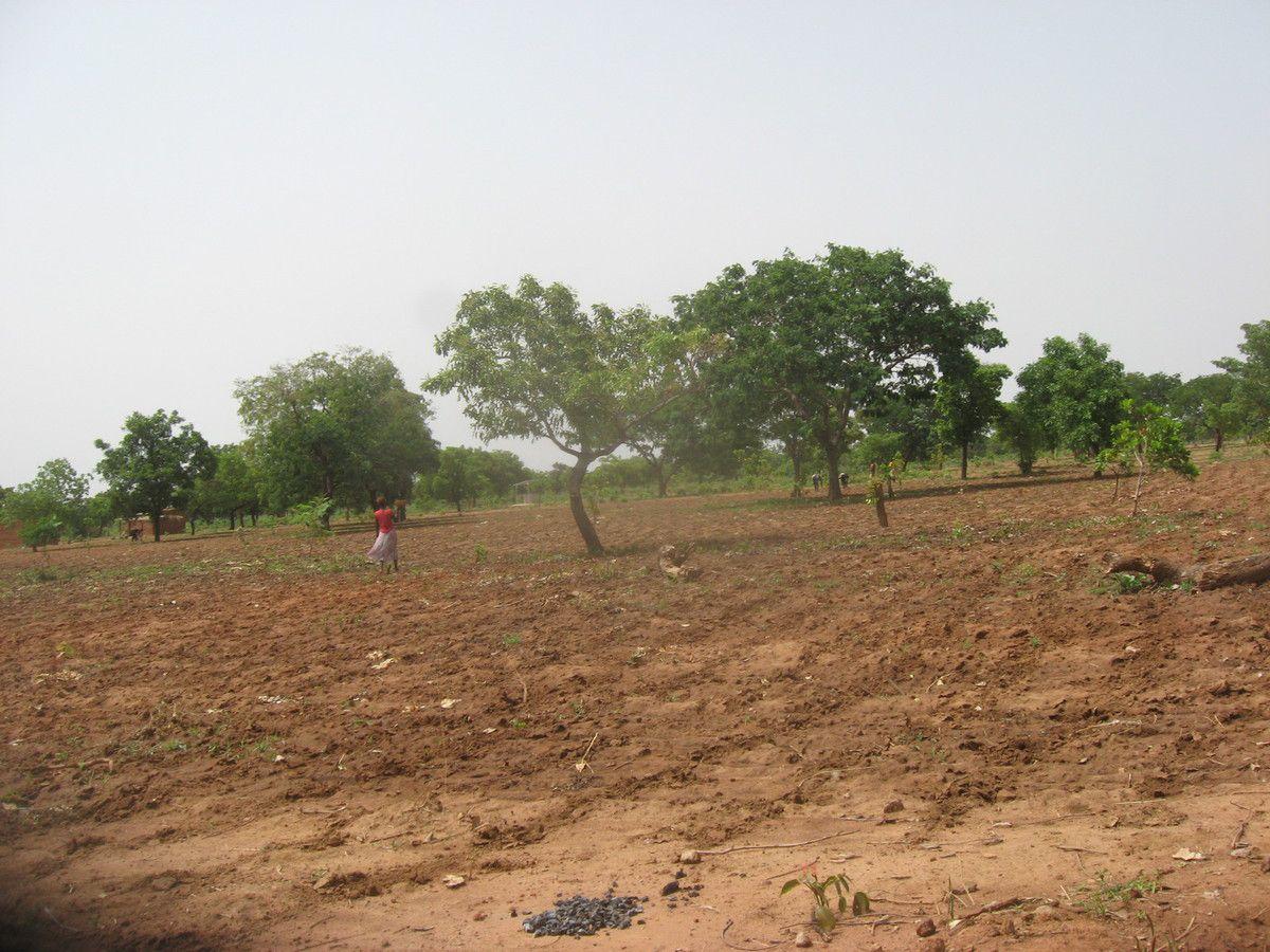Travaux de semis dans le champ pédagogique du projet Wurodinisso le 12 Juin 2015