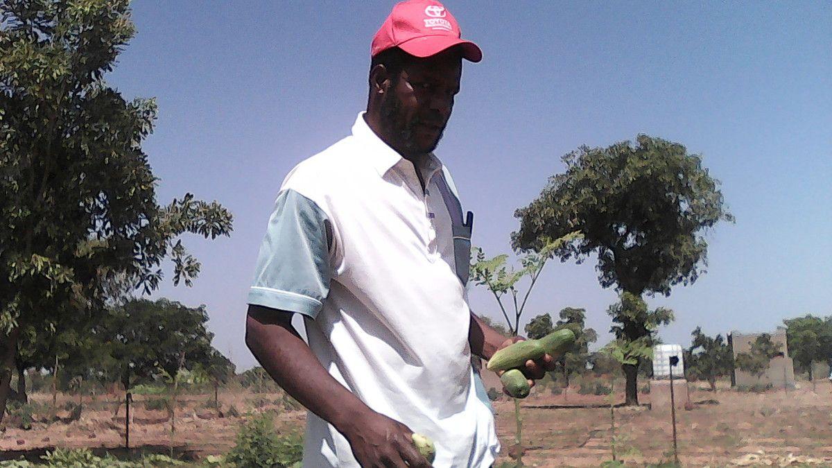 Distribution d'eau potable et culture maraîchère au projet Wurodinisso