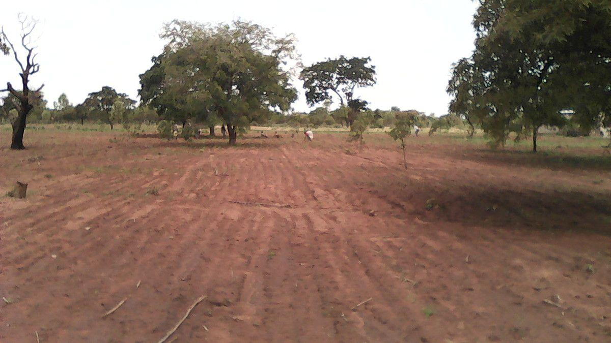 Suite des semis dans la ferme pédagogique agropstorale Wurodinisso