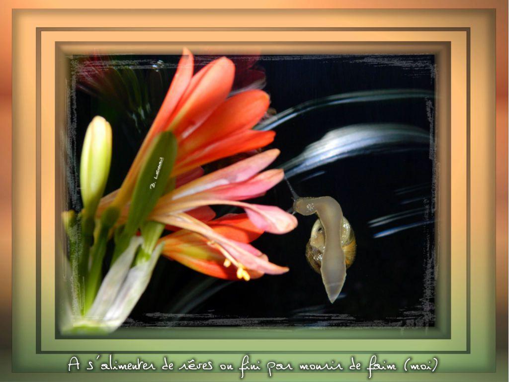 Un petit gastéropode sur une vitre, admire en bavant une belle fleur de clivia...