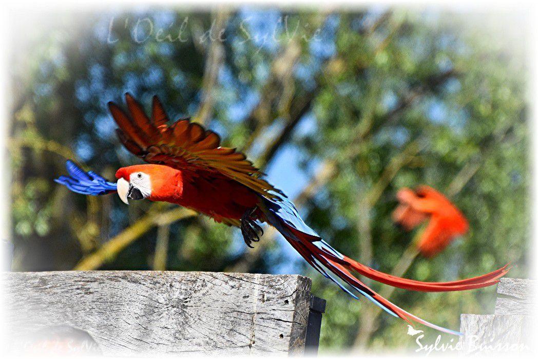 Balades au Parc des oiseaux de Villars les Dombes...