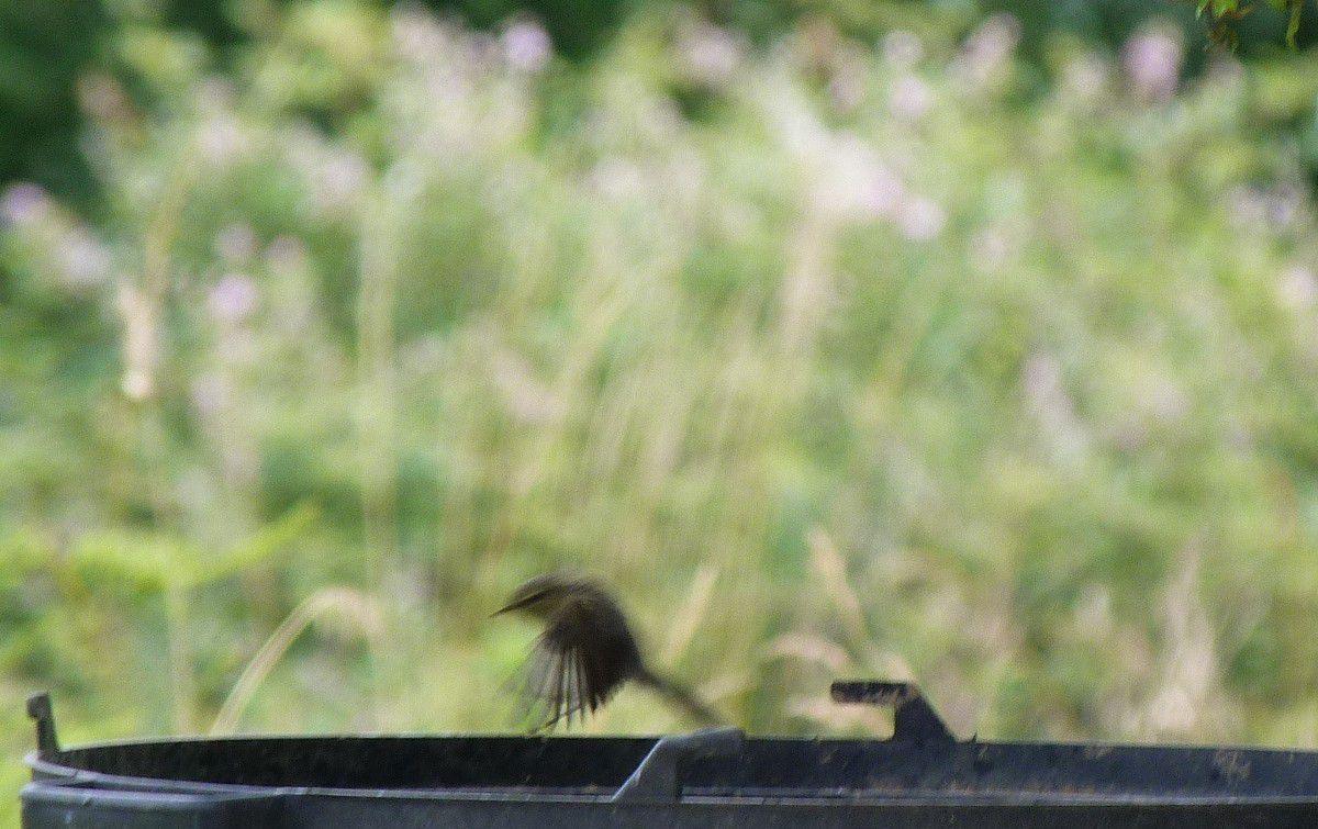Les oiseaux cherchent un petit point d'eau