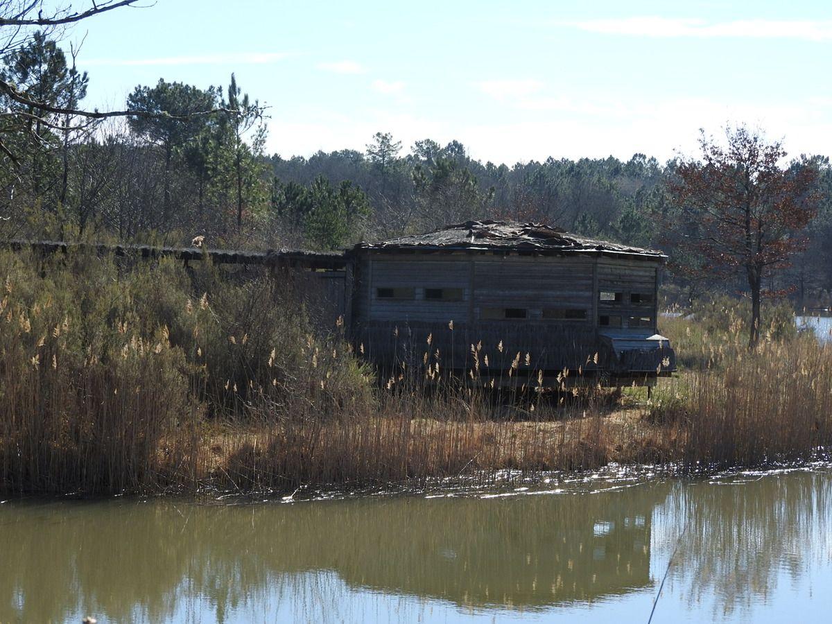 l'étang de la Jemaye