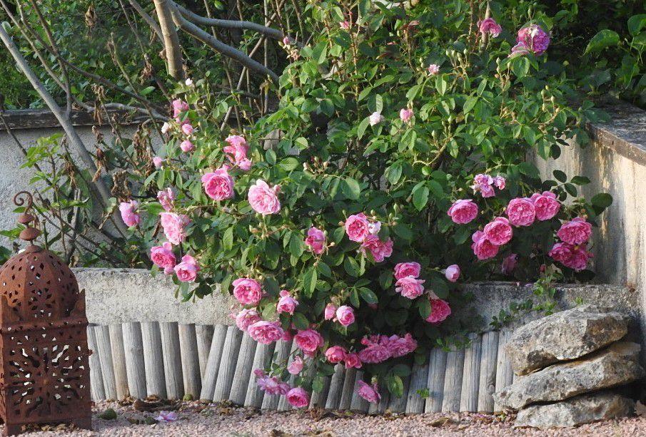 mai joli, mois de la rose et du muguet