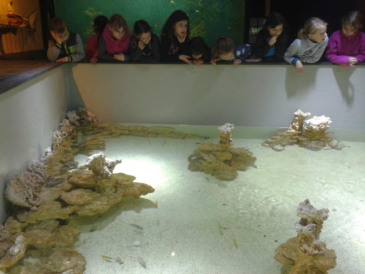 Excursion à la Maison de la Science et à l'Aquarium-Muséum de Liège (P3)