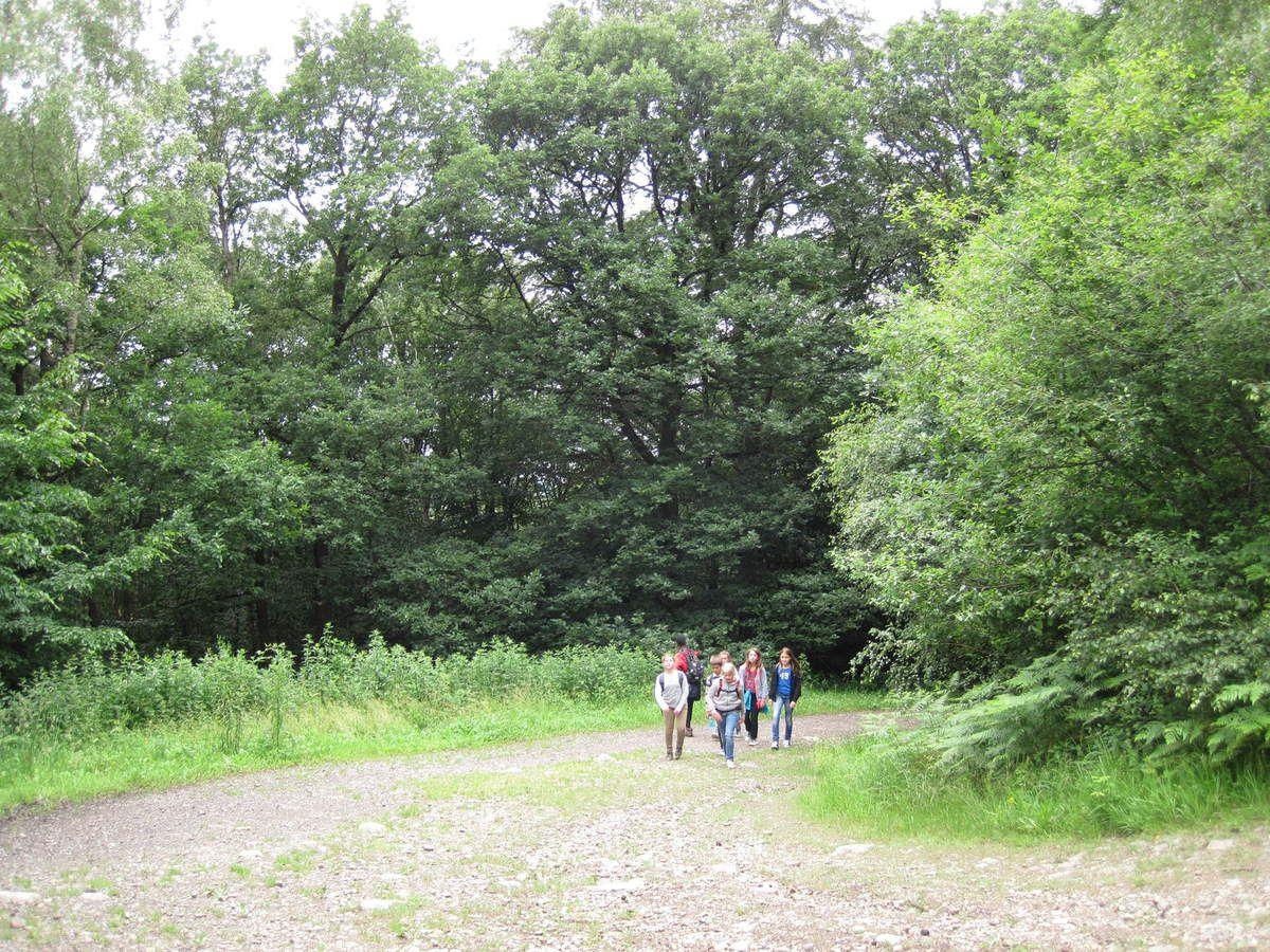 Balade dans la vallée du Ninglinspo (P6)