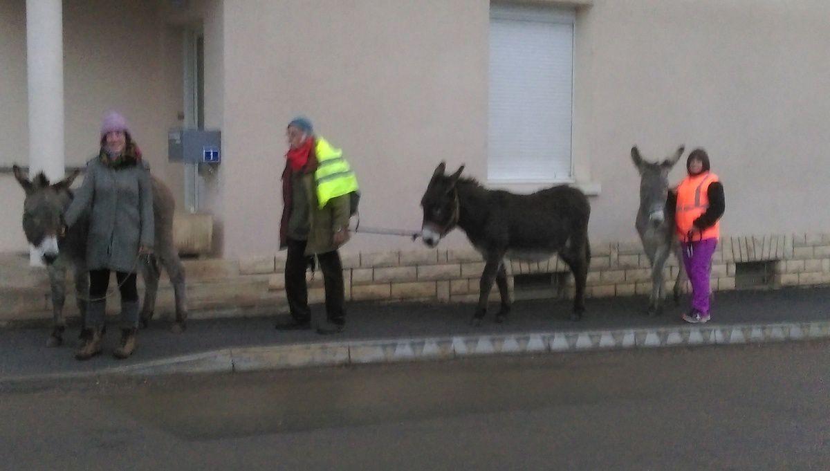 Article 123 Ballade aux pas des ânes entre Dampierre et Brevans du 14 Décembre 2016