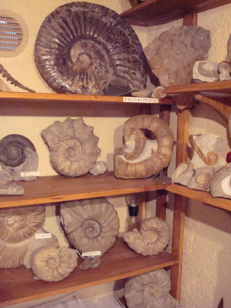 ma  collection ammonites du crétacé