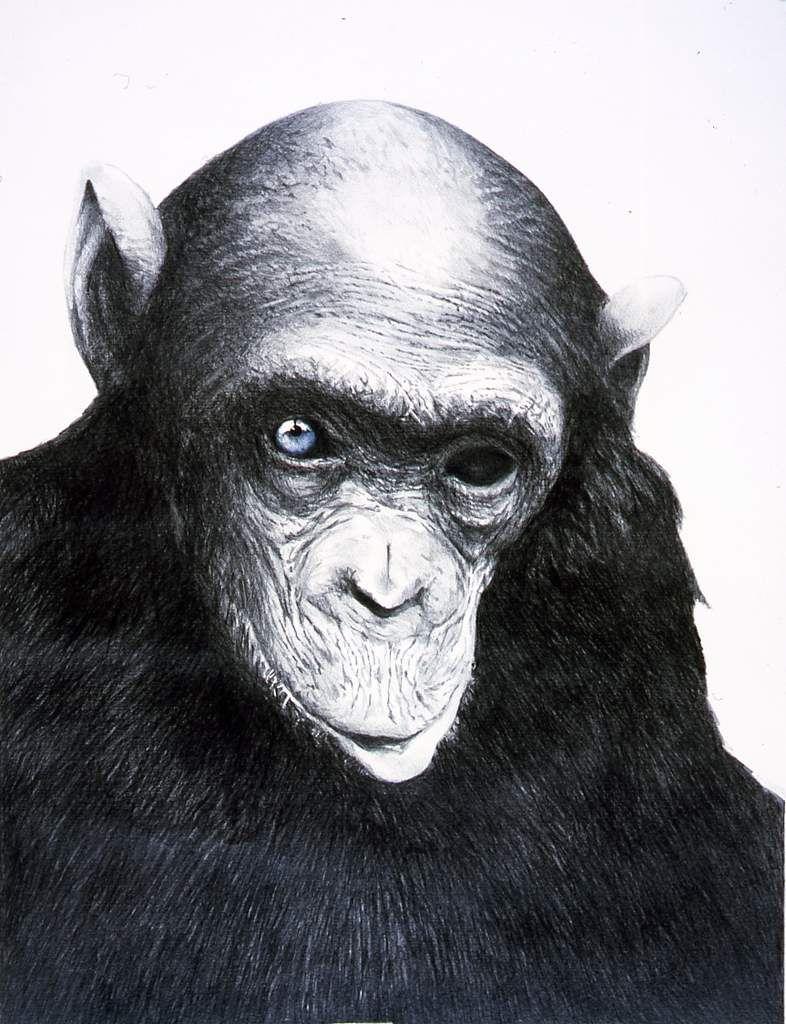 L'ŒIL DE DIEU    (  crayon sur papier   65 x 50 cm )