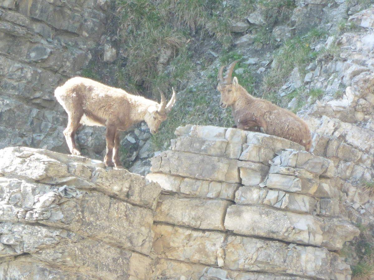 séjour naturaliste sur les hauts plateaux