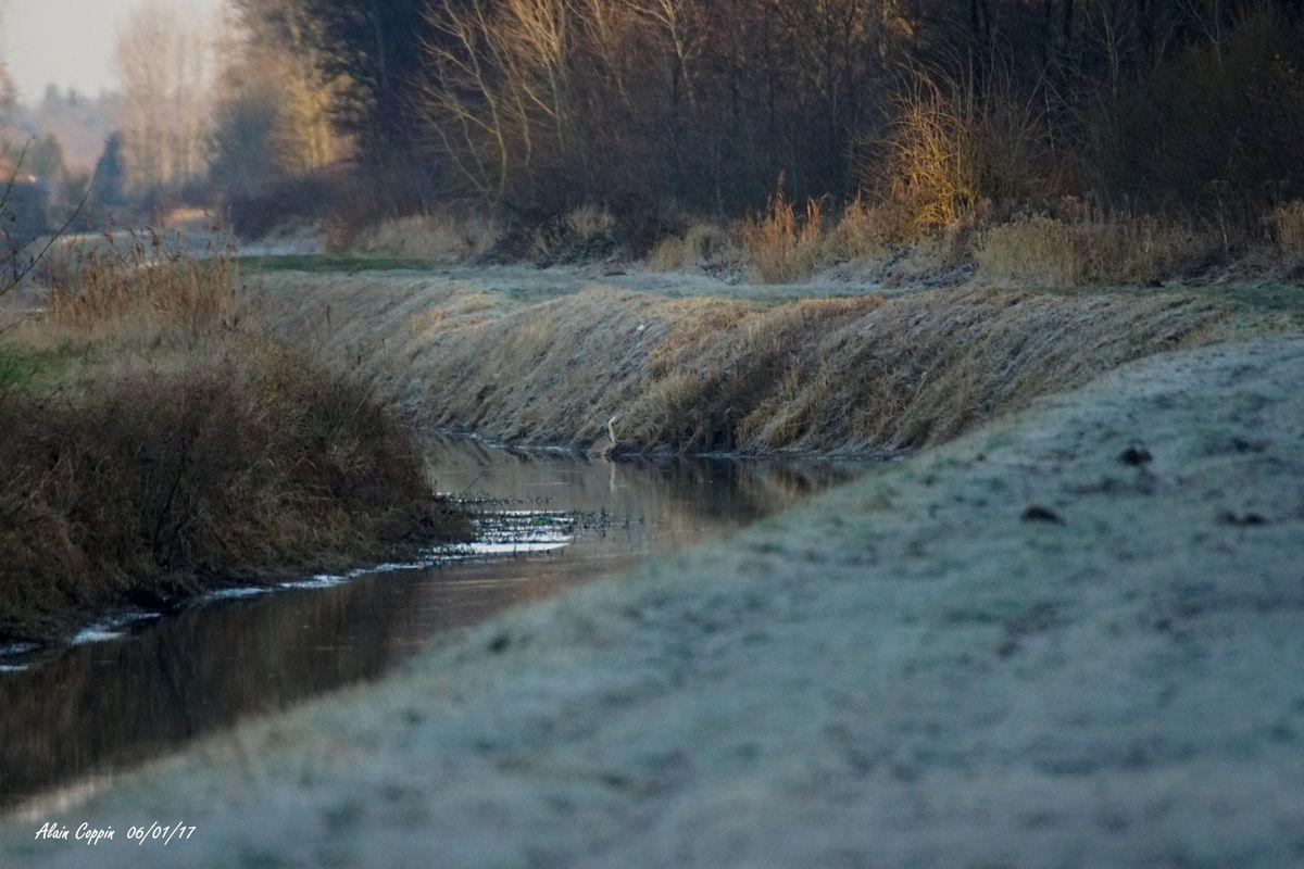 Vendredi 6 janvier, balade le long de la Nieppe et en forêt.